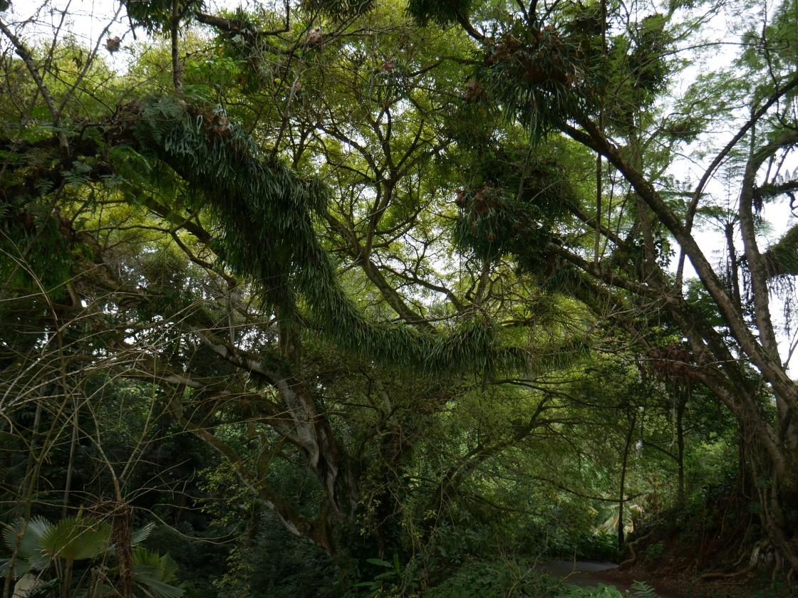 City & County of Honolulu - Wahiawā Botanical Garden